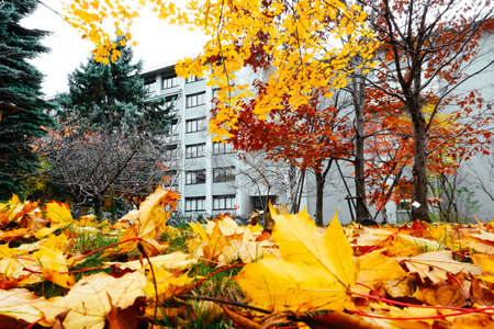 Autumn season colorful of tree and leaves  in Japan Stockfoto