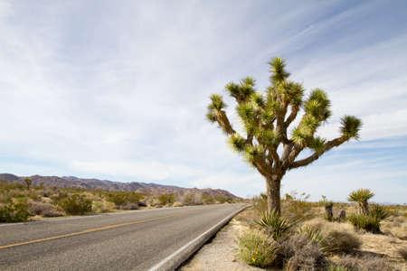 Straight road in desert