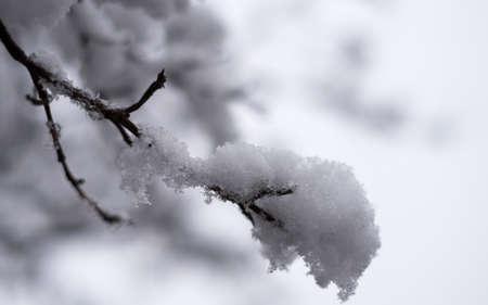 White snow tree branch Reklamní fotografie