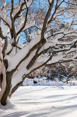 Tree covered by snow Reklamní fotografie