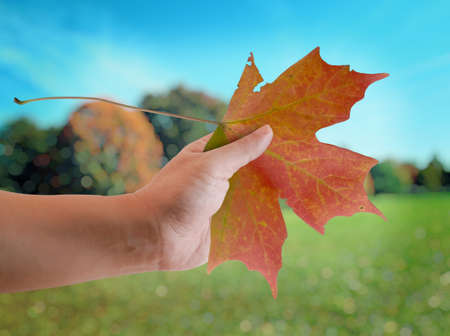 Hand of a man holding an Autumn Maple leaf with nice view in the park in Autumn.