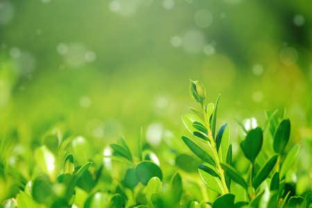 Green leaves with nice bokeh light. For background. Reklamní fotografie