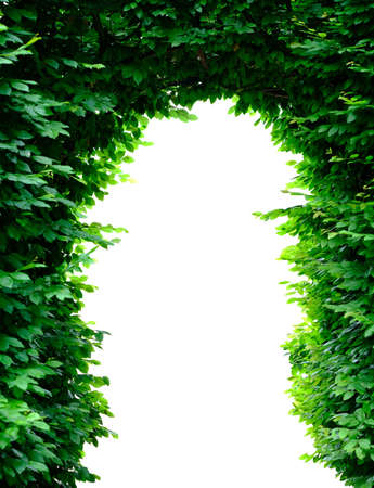 Green tree arch isolated on white background. Clipping path included.