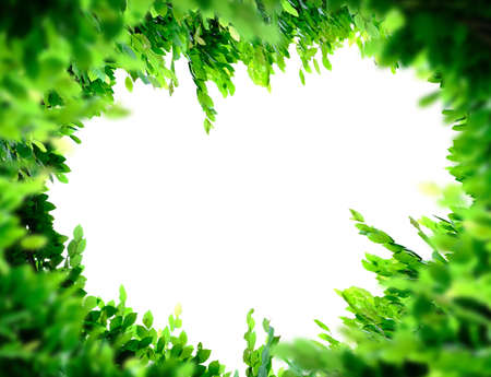 Green Leaves frame on white background, copy space.