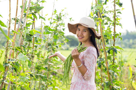 long bean: A woman holds yard long bean. Stock Photo