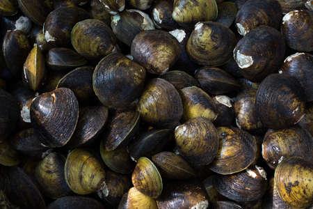 mangroves: Sea shells found in mangroves Stock Photo