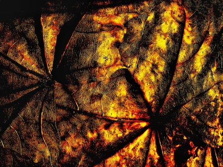 Fantacy grange background from marple leaf