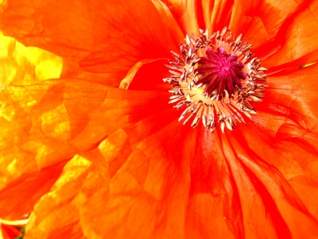 Abstract flower background photo