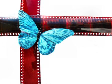 Blue butterfly sits on film photo