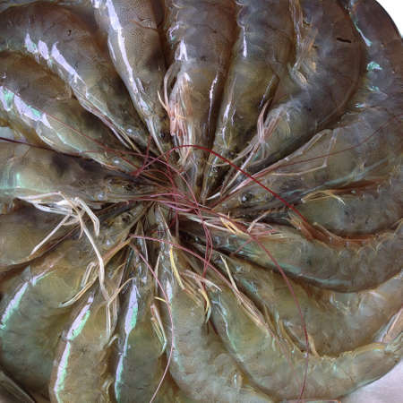 aqua: Vanamai shrimp
