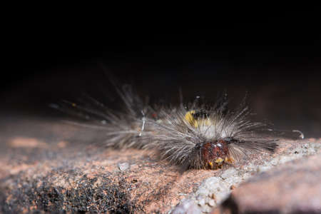 Macro caterpillar Stock Photo