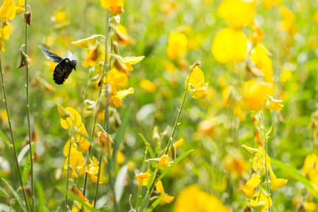 Bumble Bee swarm flying flowers Stock Photo