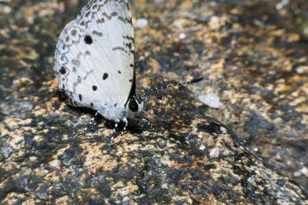 metamorphosis: macro butterfly