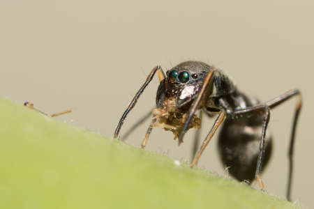 Jumping spiders to giant ants Stock Photo