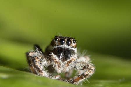 Macro Spider on Leaf Stock Photo