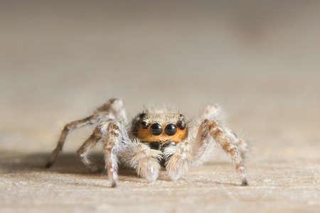 Macro Spider on wood