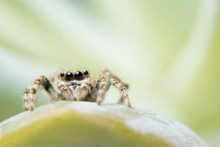Close-ups Spider on the leaf