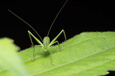 Take a closer look at the green grasshopper. Stock Photo