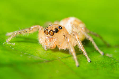 Macro spider on the leaf 写真素材