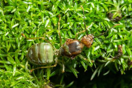 Macro green ants on grass