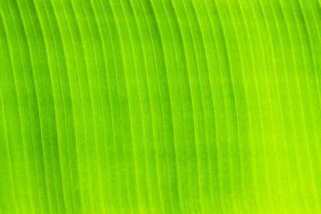 Green leaf background Imagens