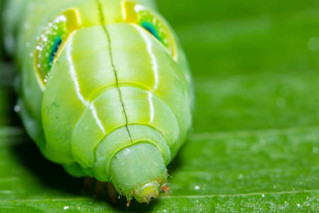 Macro worm on the plant. Banque d'images - 121630241