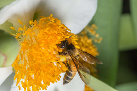 Bees are swarming macro flower