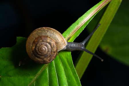 Macro background, snail on leaf