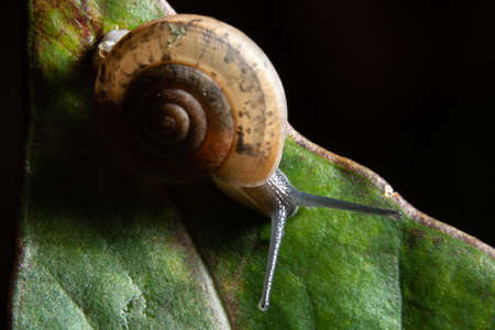 Macro snail on green leaf
