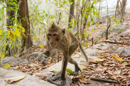 Monkey in the wild