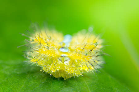 Macro worm on the plant. Banque d'images - 121637264