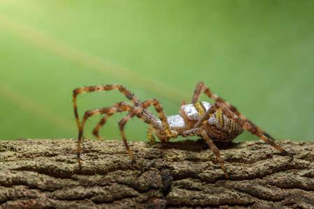 Macro spider on the plant