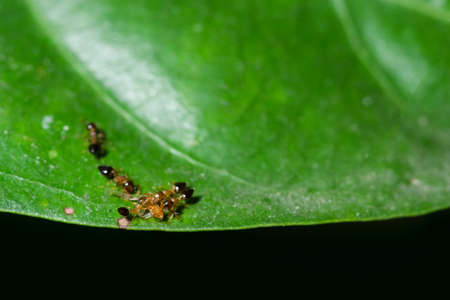Macro Ants on Plants Stock Photo