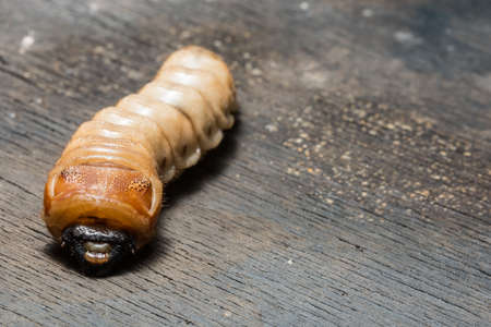 Beetle worm macro