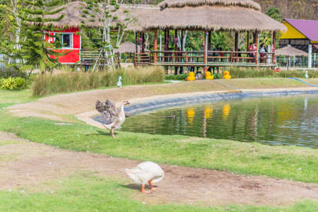 Goose in the zoo