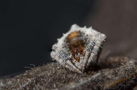 Macro Spider Bokeo Background