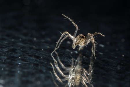 Macro spider on glass 写真素材