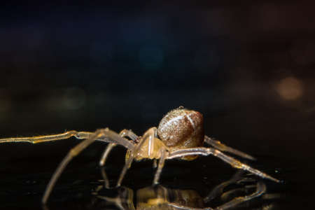 Macro Spider Bokeo Background