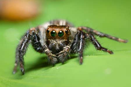 Araignée macro sur la feuille