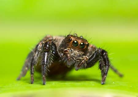 Macro spider on the leaf