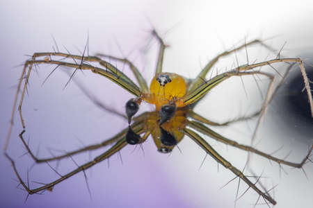 Macro Spider Yellow Background Colorful