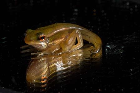 Frog puppet black background