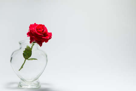 love Valentines Day Background of red roses in heart-shaped bottle