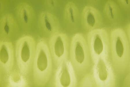 Macro Cucumber Green Background