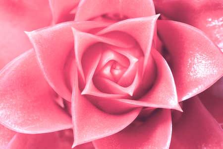 Pink flower background Imagens