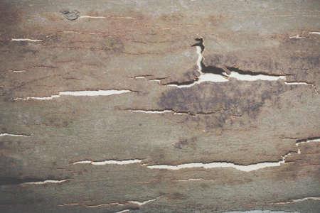 Background bark surface