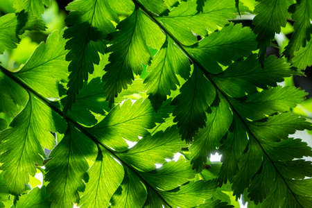 Green leaf background Stockfoto - 123242951