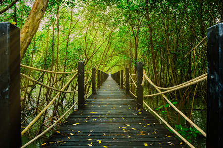 The beautiful nature walks