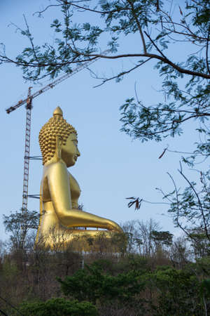 Buddha overlooking the forest