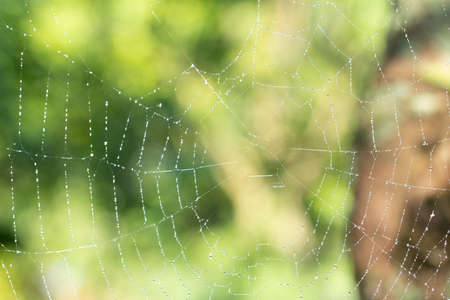Macro-achtergronddruppels op spinnenweb